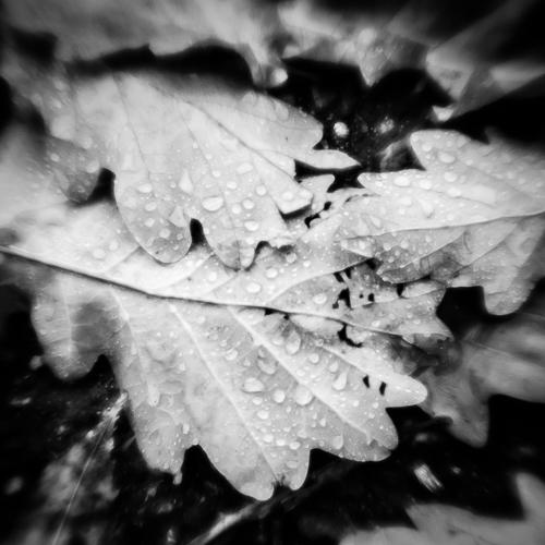Leaves & Raindrops I, L'Isle, Switzerland 2013