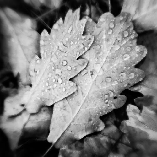 Leaves & Raindrops 2, L'Isle, Switzerland 2013