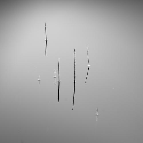 Reeds I, L'Etang de la Gruère, Switzerland 2012