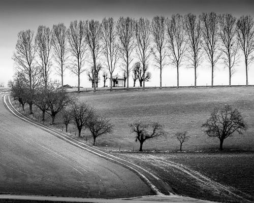 Treeline I, Concise, Switzerland 2013