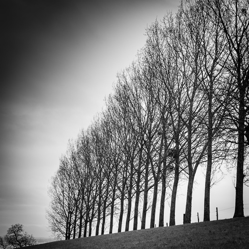 Treeline II, Concise, Switzerland 2013