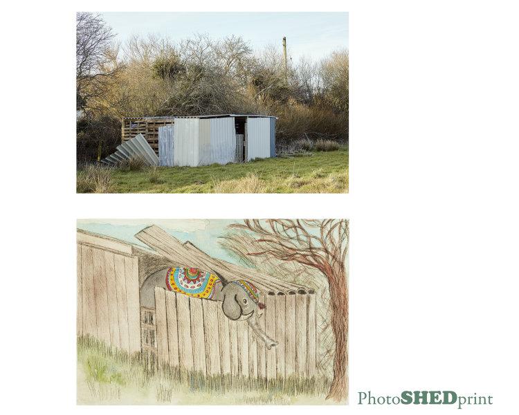 elelphant shed