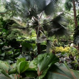 Ferns Singapore Botanical Gardens