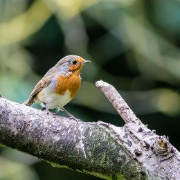 Robin-Rutland-Water
