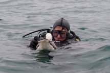 Fulmar and Diver