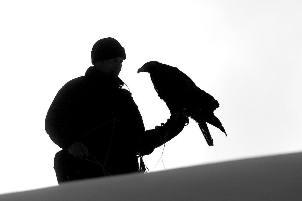 Golden Eagle and Falconer
