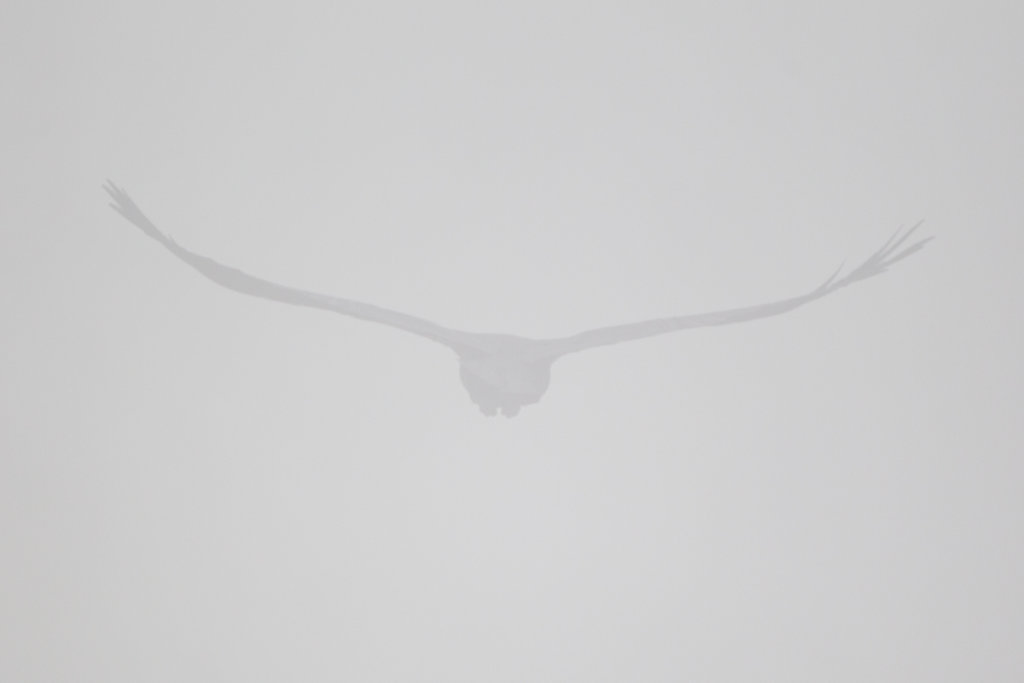 Raven in the Mist - Langdon Cliff