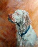 Alfie, oil on canvas, 40x50cm (Commission)