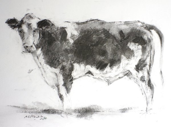 Cow, charcoal on paper, 30x20cm