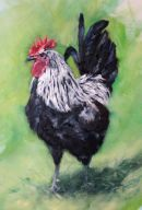 Cock, oil on canvas - sold