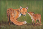 Red Fox & Youngster