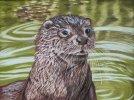 Otter Emerging