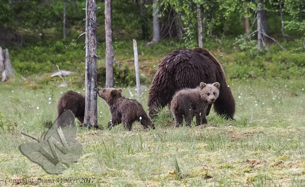 Mother and new cubs