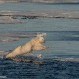 Arctic 2016 - Andy Barnes-11