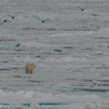 Arctic 2016 - Andy Barnes-15