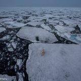 Arctic 2016 - Andy Barnes-19