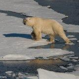 Arctic 2016 - Andy Barnes-2