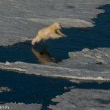 Arctic 2016 - Andy Barnes-8