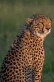 Kenya 2015 - Andy Barnes-169