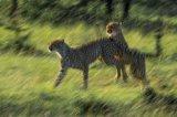Kenya 2015 - Andy Barnes-182