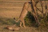 Kenya 2015 - Andy Barnes-23