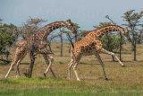 Kenya 2015 - Andy Barnes-28