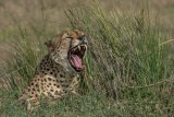 Kenya 2015 - Andy Barnes-30