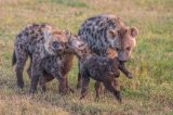 Kenya 2015 - Andy Barnes-33
