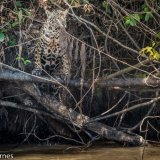 Pantanal 2016 - Andy Barnes-10