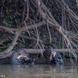 Pantanal 2016 - Andy Barnes-12