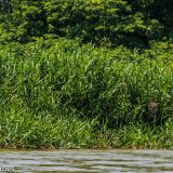 Pantanal 2016 - Andy Barnes-14