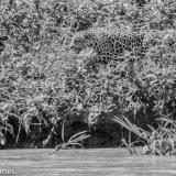 Pantanal 2016 - Andy Barnes-15
