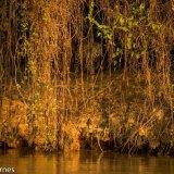 Pantanal 2016 - Andy Barnes-16