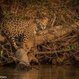 Pantanal 2016 - Andy Barnes-17