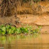 Pantanal 2016 - Andy Barnes-18