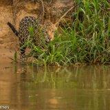 Pantanal 2016 - Andy Barnes-19