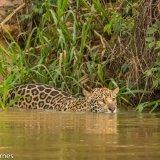 Pantanal 2016 - Andy Barnes-20