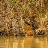 Pantanal 2016 - Andy Barnes-21