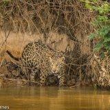 Pantanal 2016 - Andy Barnes-22