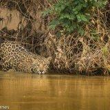 Pantanal 2016 - Andy Barnes-23