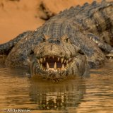 Pantanal 2016 - Andy Barnes-24