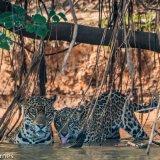 Pantanal 2016 - Andy Barnes-26