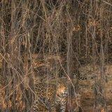 Pantanal 2016 - Andy Barnes-28