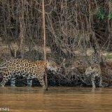 Pantanal 2016 - Andy Barnes-29