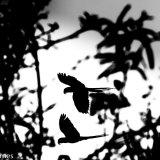 Pantanal 2016 - Andy Barnes-30
