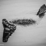 Pantanal 2016 - Andy Barnes-3