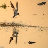Pantanal 2016 - Andy Barnes-4