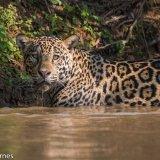 Pantanal 2016 - Andy Barnes-5