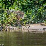 Pantanal 2016 - Andy Barnes-6