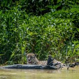 Pantanal 2016 - Andy Barnes-7